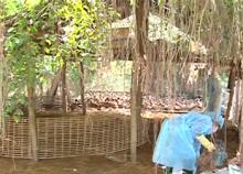 Virus cúm mới  vào Việt Nam từ  nguồn gà, vịt nhập lậu