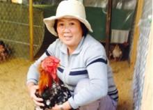 Bảo tồn giống gà quý hiếm thành công tại KHÁNH HÒA