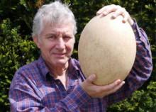Quả trứng khổng lồ cao 30cm được bán đấu giá