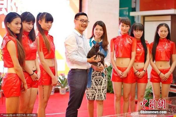Cuộc thi sắc đẹp dành cho gà 03