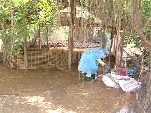 Virus cúm mới vào Việt Nam từ gà, vịt nhập lậu