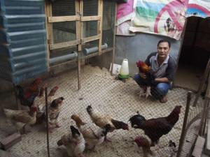 Kiếm hàng trăm triệu đồng từ nuôi gà Đông Tảo