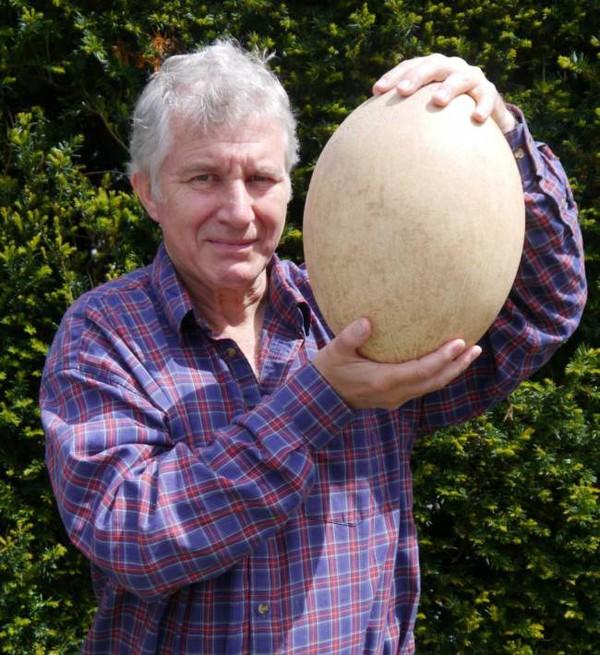 Quả trứng khổng lồ cao 30cm được đấu giá